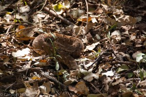 well camouflaged